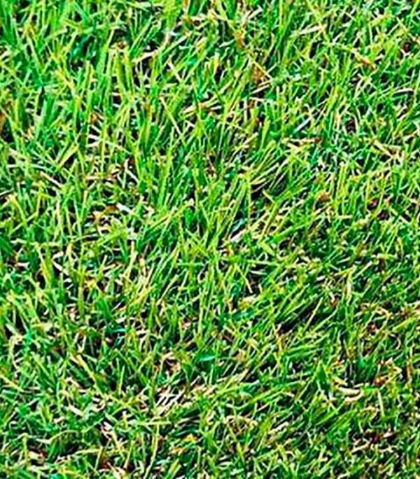 Искусственная трава Grass MIX 4 м 30 мм фото
