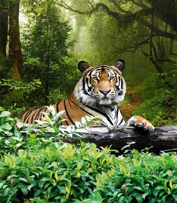 Фотообои Ateliero Тигр 20-8058 (2х2,7 м)