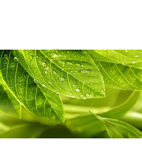 Плитка декор 250х400х8 мм Релакс зеленый №1 494311