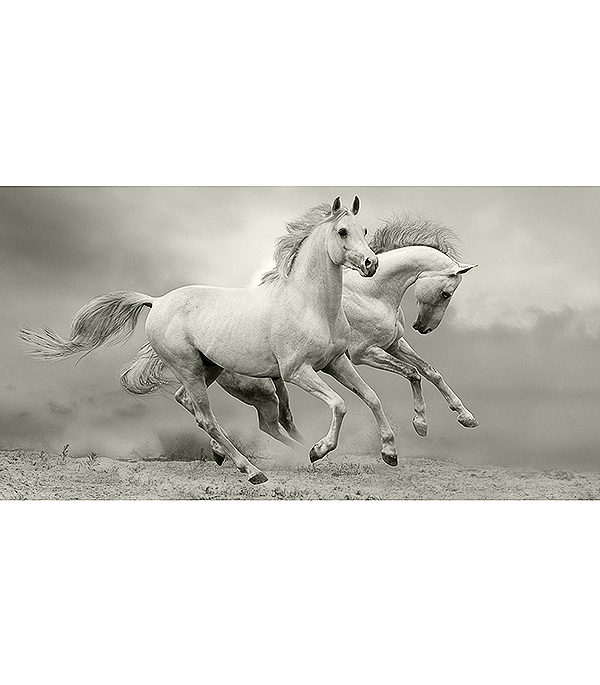 Фотообои 2,5х1,3 м 1 лист Лошади арт. 230090 OVK Design