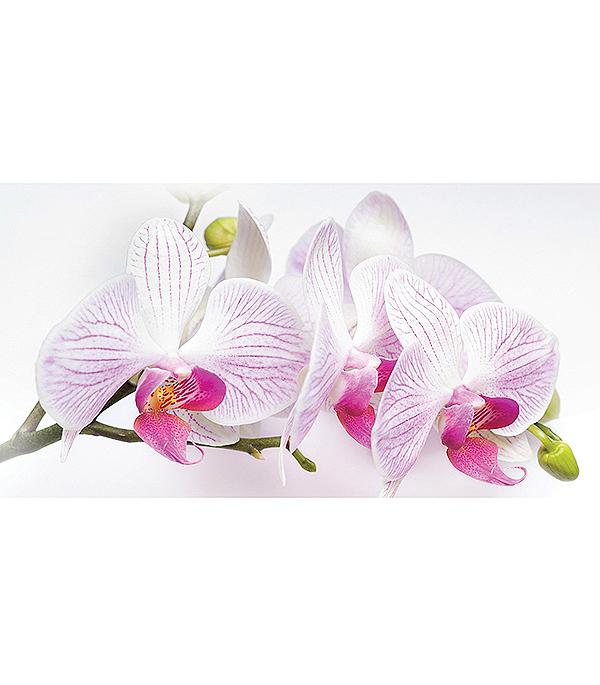 Фотообои 2,5х1,3 м 1 лист Орхидея арт. 230092 OVK Design